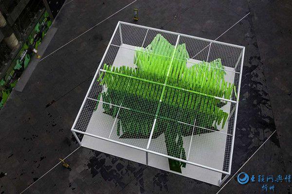 一片绿叶飘落的瞬间――南京环保公益活动传递中国绿