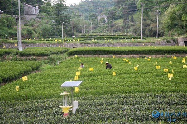 中国科学家历时16年找到蝗灾真凶 绿色防控成为可能