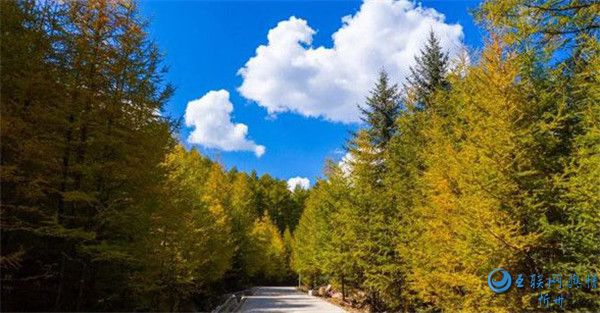 芦芽山层林尽染 秋色渐入佳境