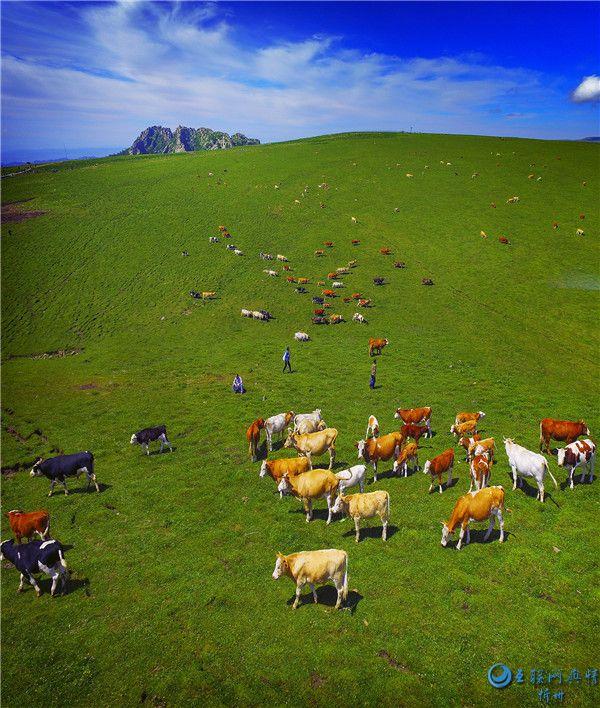 来芦芽山马伦草原,你一定会惊叹于大自然的神奇壮美!
