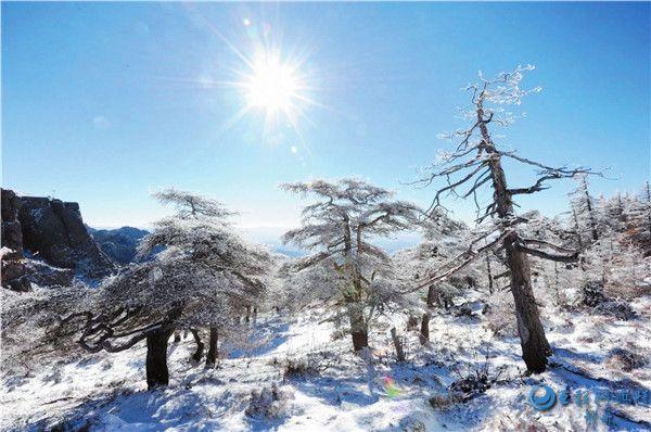 芦芽雪景美如画