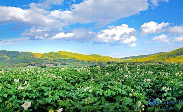 """岚县""""三个链条""""助推马铃薯特色产业高质量发展"""